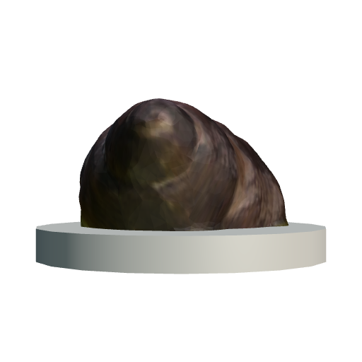Cyclonema humerosum (Click to view in 3D!)